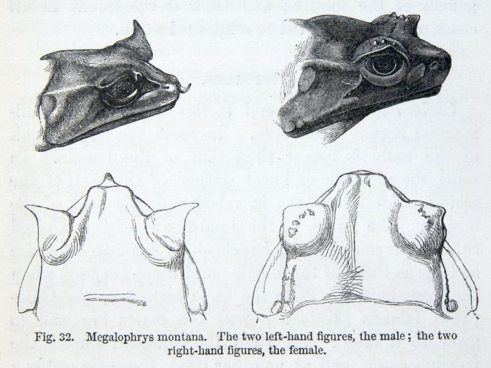 Image of Darwin-F937.2-1871-zzzz-det-027