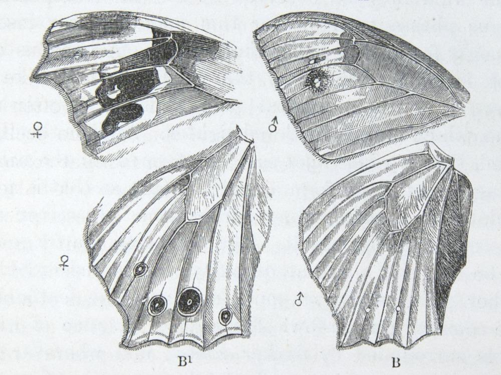 Image of Darwin-F937.2-1871-zzzz-det-133
