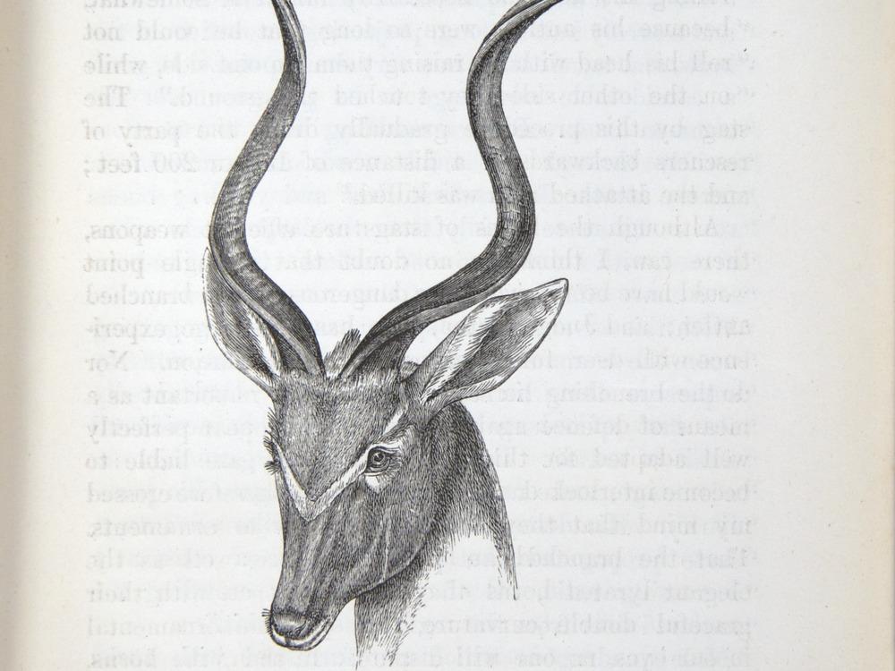 Image of Darwin-F937.2-1871-zzzz-det-255-1