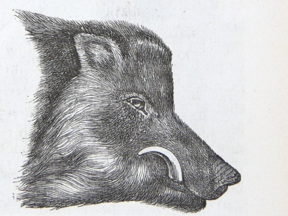 Image of Darwin-F937.2-1871-zzzz-det-263