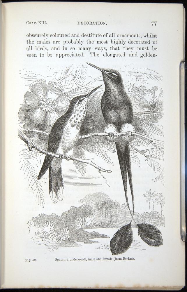 Image of Darwin-F937.2-1871-077