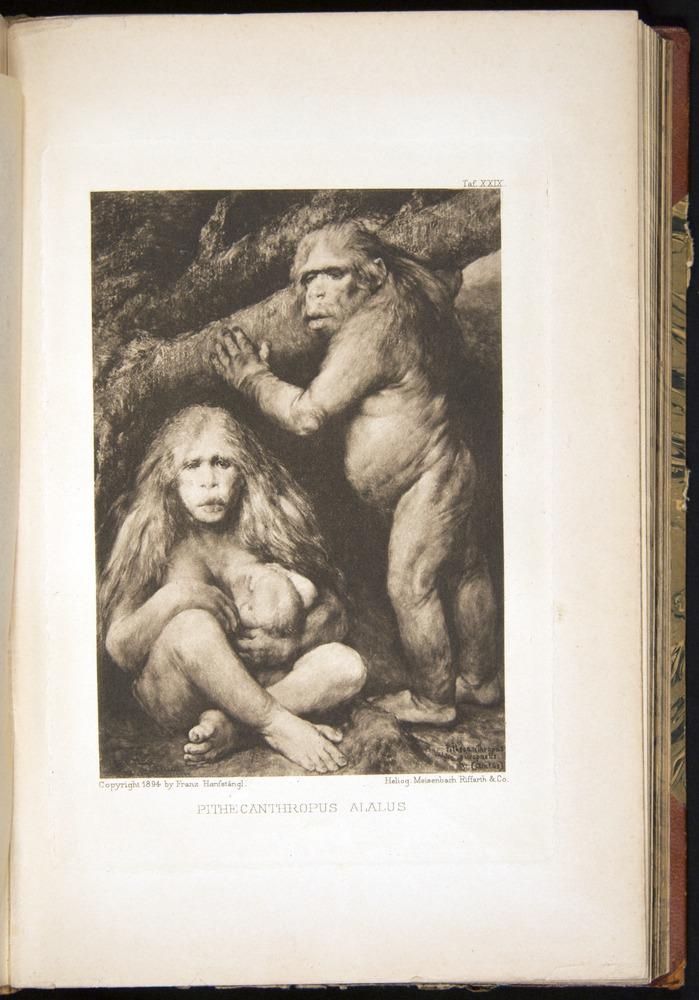 Image of Haeckel-1902-v1-36687