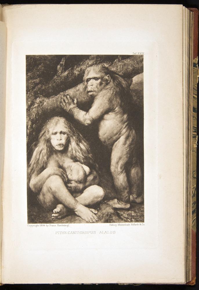 Image of Haeckel-1902-v1-36689