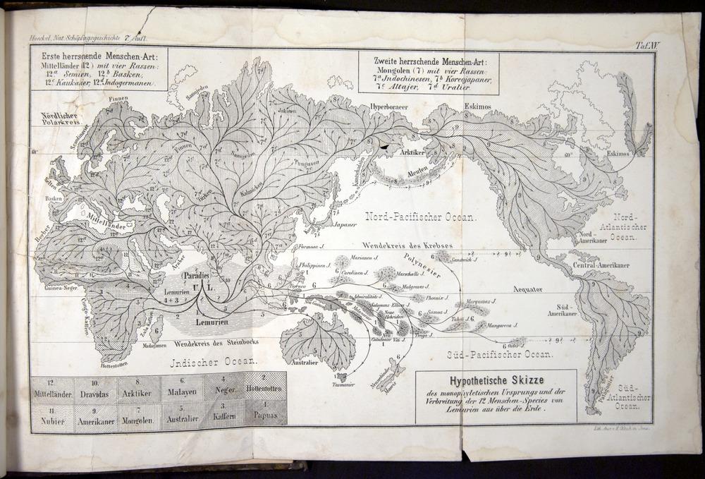 Image of Haeckel-1902-v1-36695