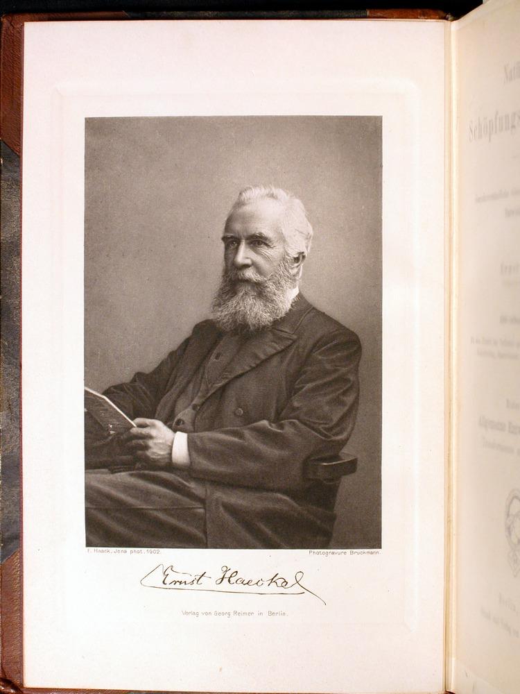 Image of Haeckel-1902-v1-36698