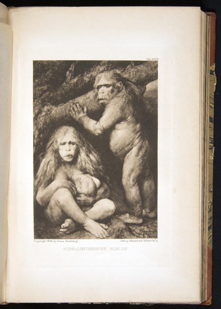 Image of Haeckel-1902-v1-f29