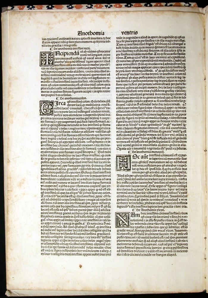 Image of MondinoDeiLuzzi-1507-003v