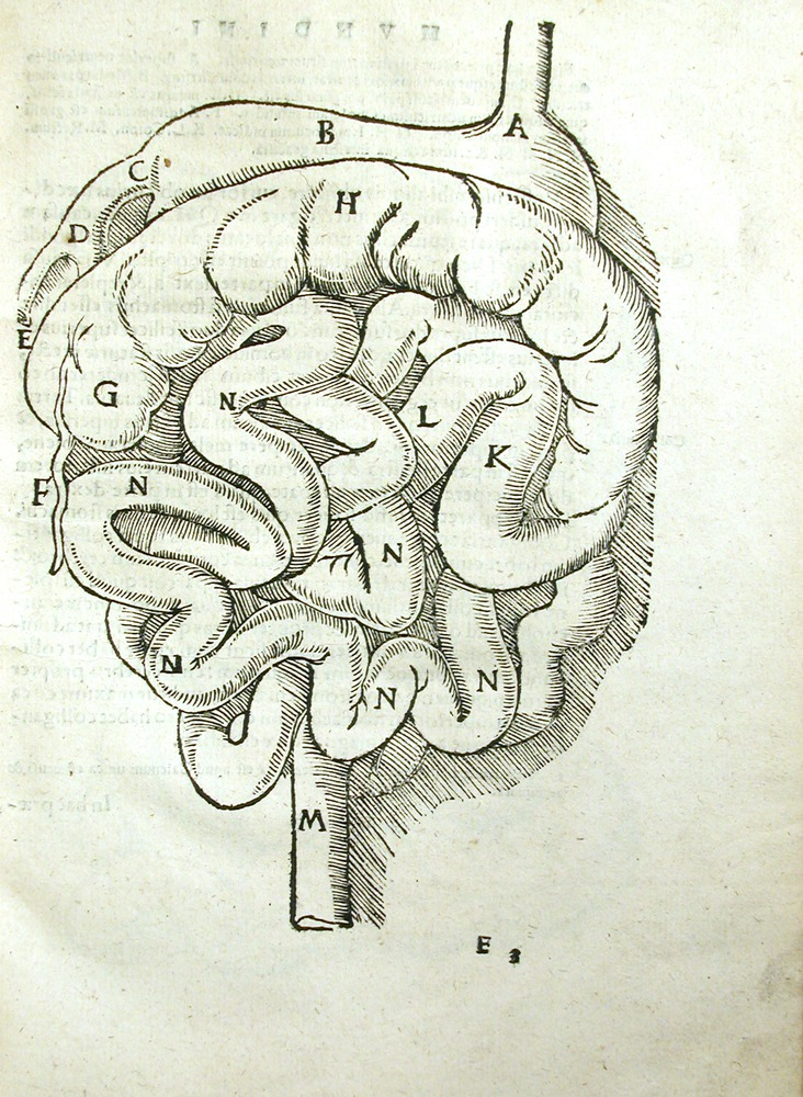 Image of MondinoDeiLuzzi-1541-e3r