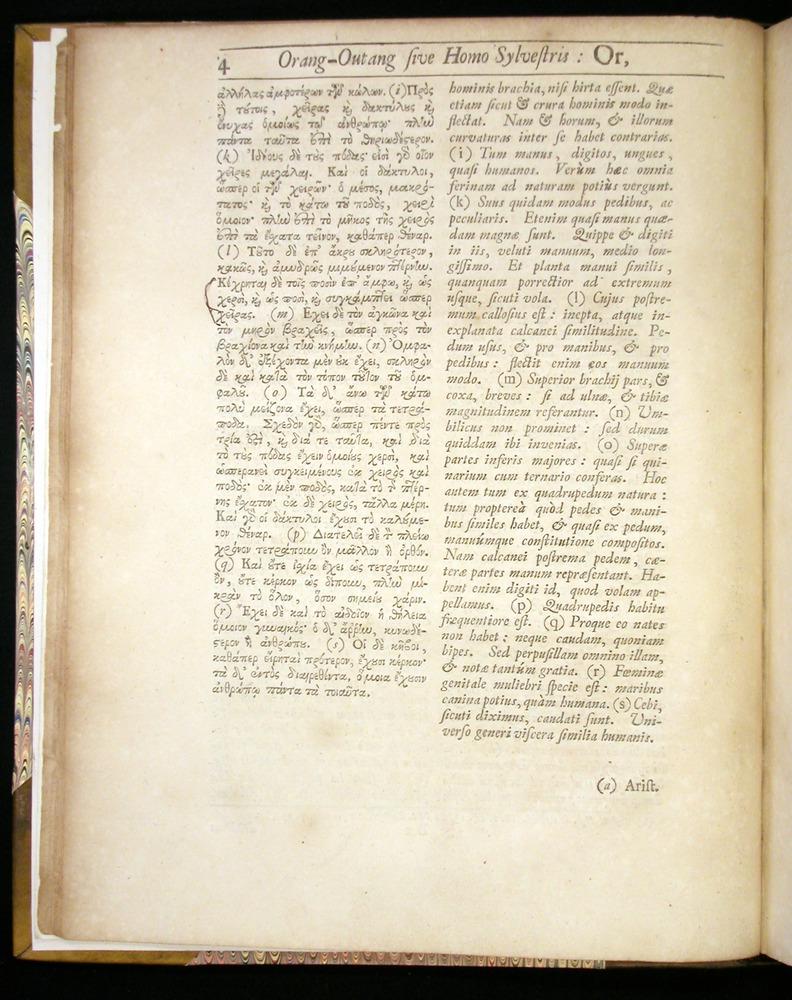 Image of Tyson-1751-004
