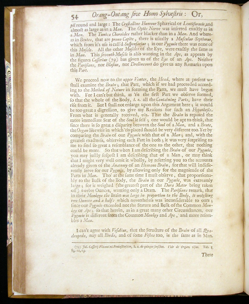 Image of Tyson-1751-054