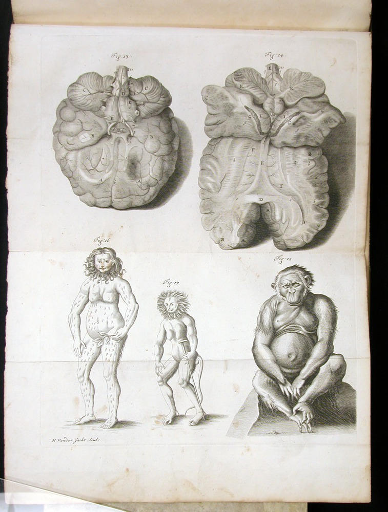 Image of Tyson-1751-fig13