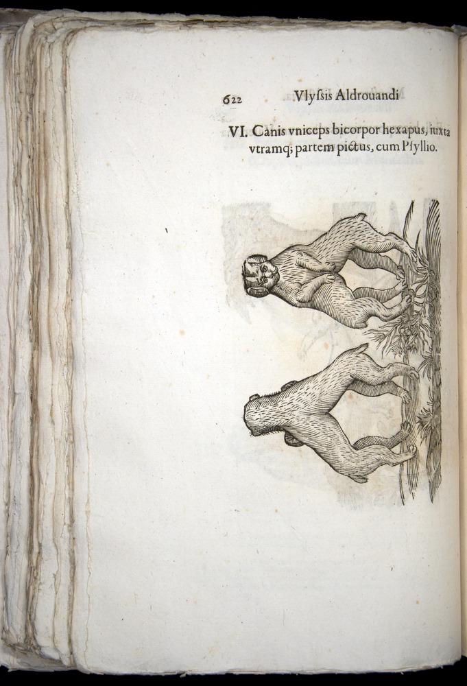 Image of Aldrovandi-1570-0622