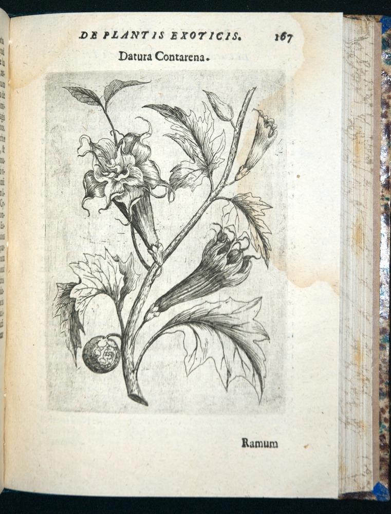 Image of Alpini-1629-00167