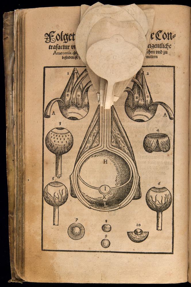 Image of Bartisch-1583-008v-f