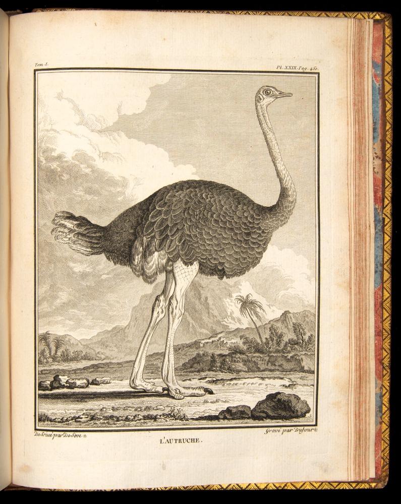 Image of Buffon-1770-v16-450-p29r