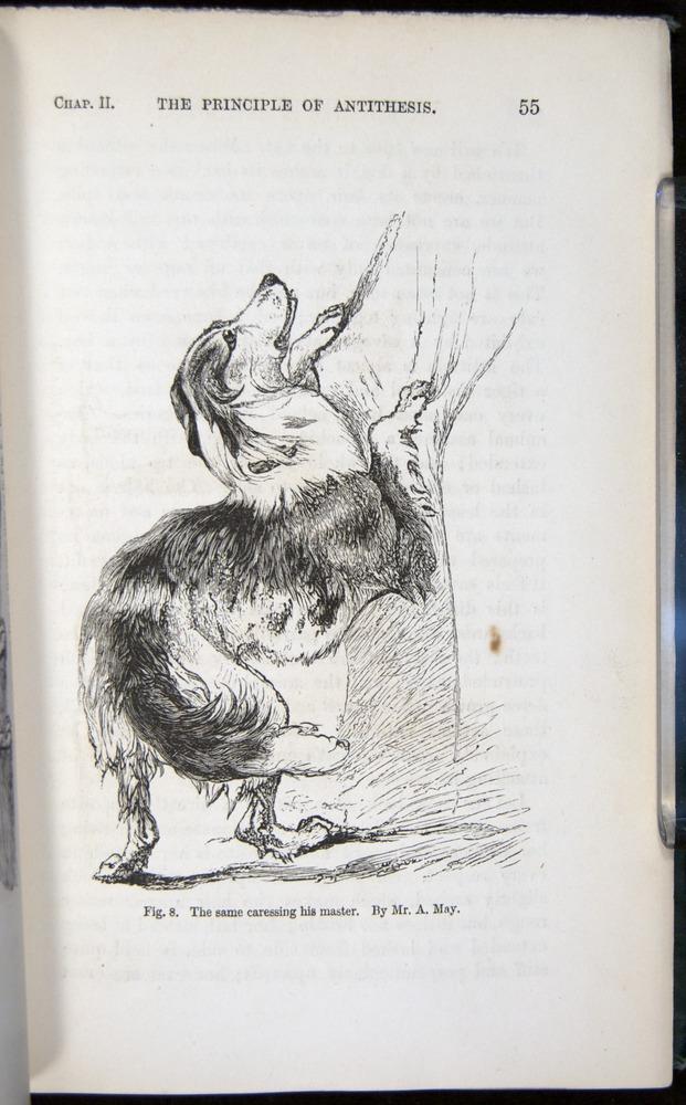 Image of Darwin-F1142-1872-055