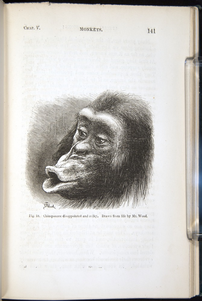 Image of Darwin-F1142-1872-141