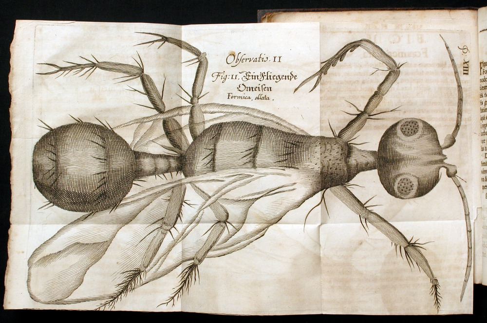 Image of Griendel-1687-013-obs2-fig2