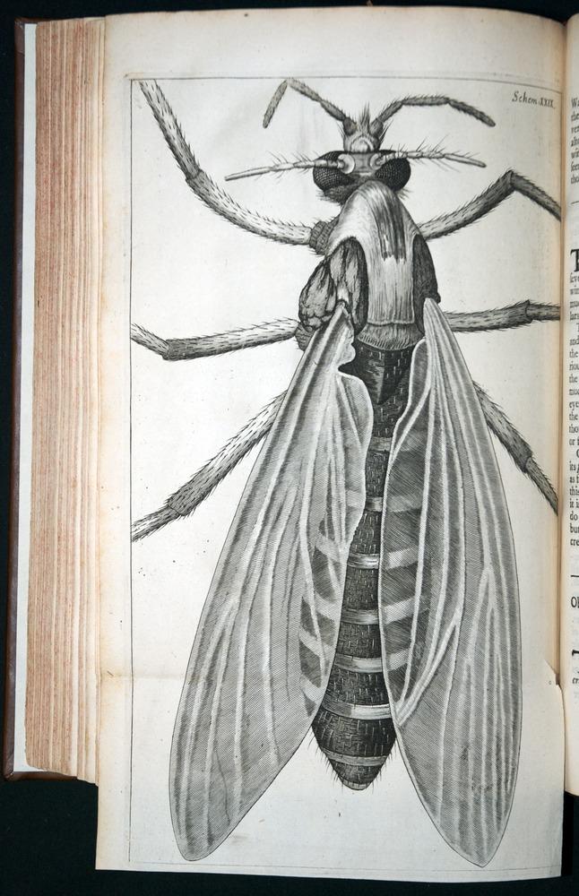 Image of Hooke-1665-194plv