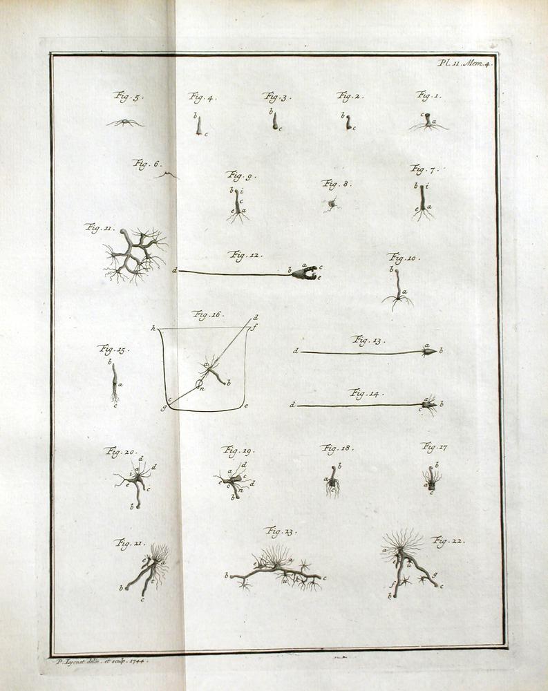 Image of Trembley-1744-pl11