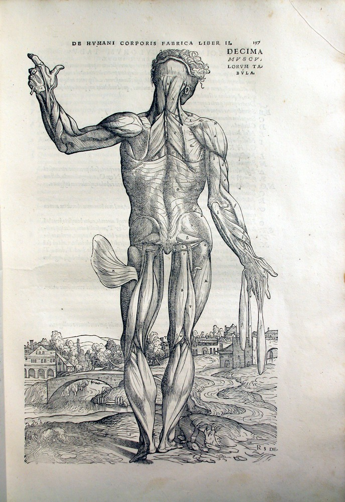 Image of Vesalius-1543-197
