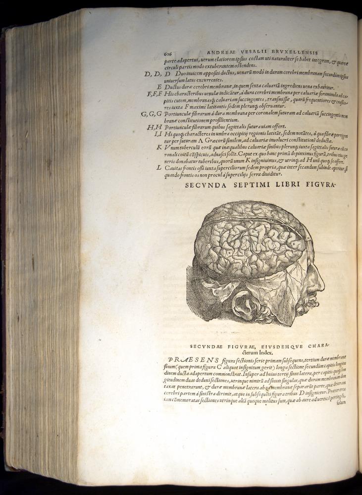 Image of Vesalius-1543-606