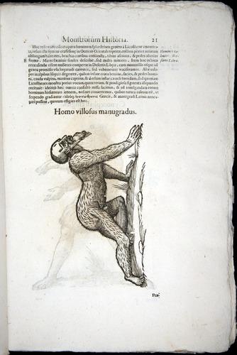 Image of Aldrovandi-1570-0021