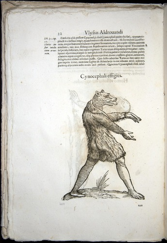 Image of Aldrovandi-1570-0022