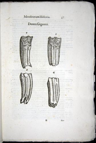 Image of Aldrovandi-1570-0037