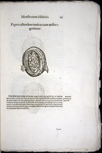 Image of Aldrovandi-1570-0045