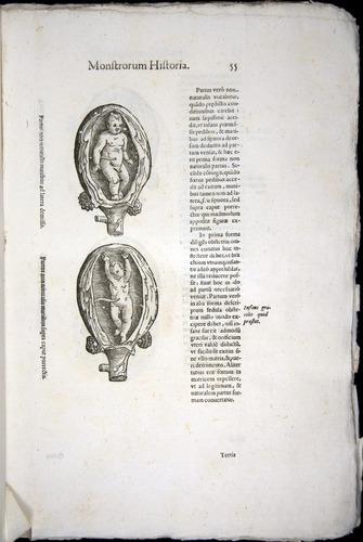 Image of Aldrovandi-1570-0055