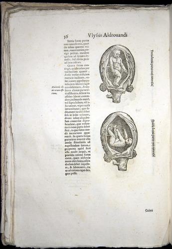 Image of Aldrovandi-1570-0056