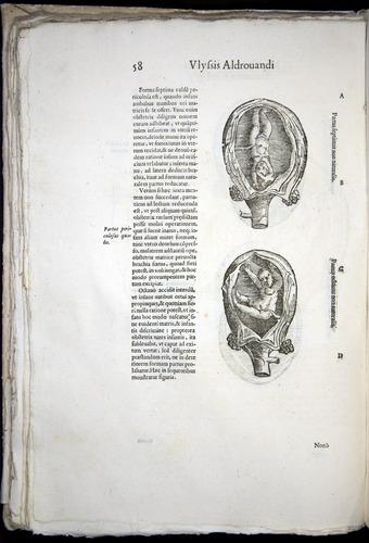 Image of Aldrovandi-1570-0058