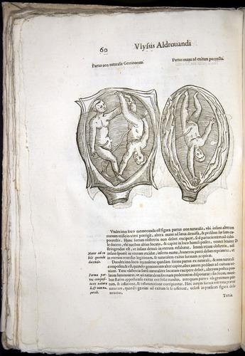 Image of Aldrovandi-1570-0060