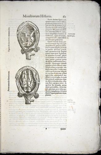 Image of Aldrovandi-1570-0061