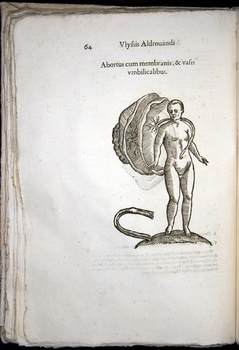 Image of Aldrovandi-1570-0064