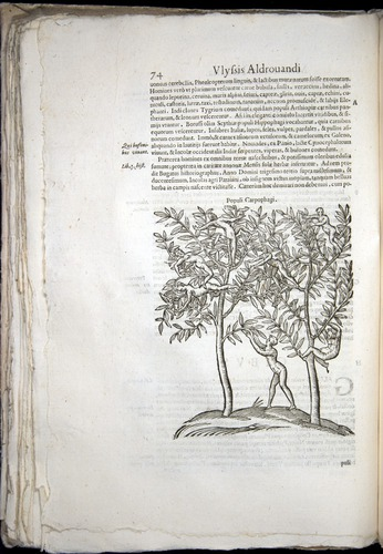 Image of Aldrovandi-1570-0074