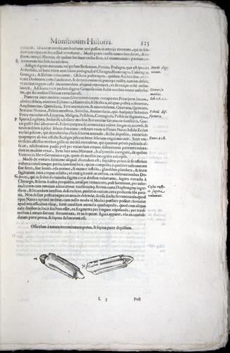 Image of Aldrovandi-1570-0125