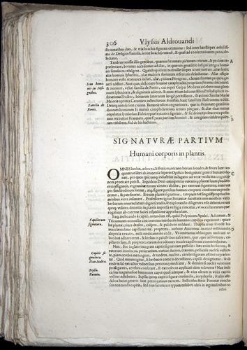Image of Aldrovandi-1570-0306