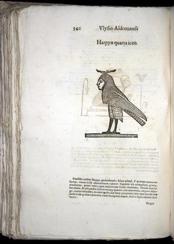 Image of Aldrovandi-1570-0340