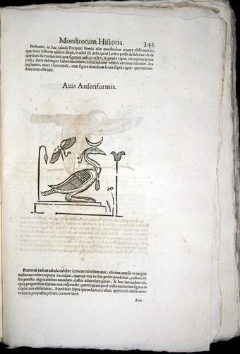Image of Aldrovandi-1570-0345