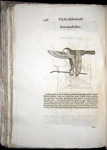 Image of Aldrovandi-1570-0346