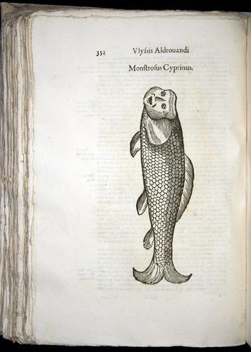 Image of Aldrovandi-1570-0352