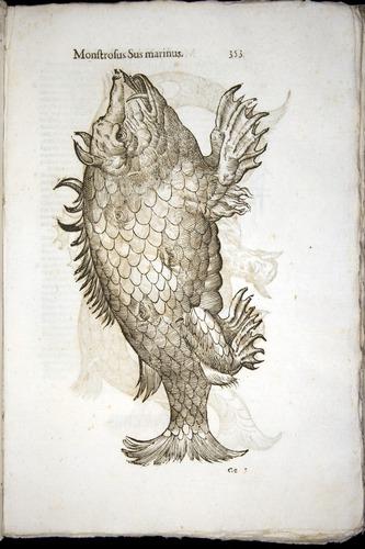 Image of Aldrovandi-1570-0353