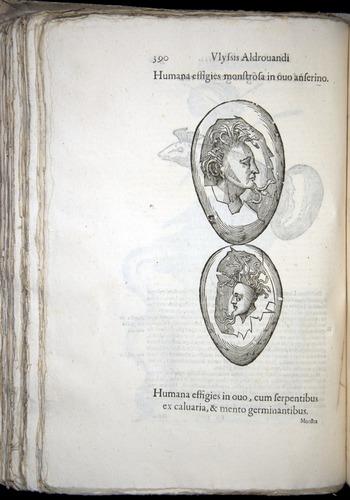 Image of Aldrovandi-1570-0390