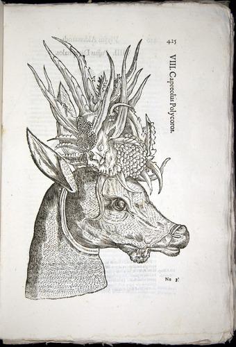 Image of Aldrovandi-1570-0425