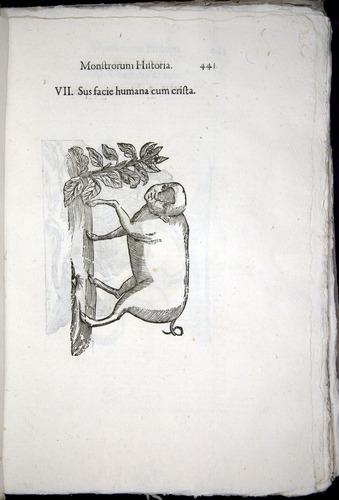 Image of Aldrovandi-1570-0441