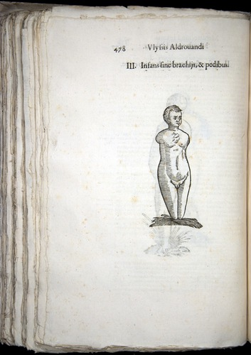 Image of Aldrovandi-1570-0478