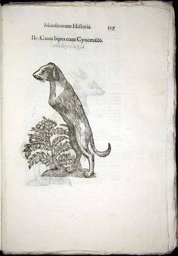 Image of Aldrovandi-1570-0527