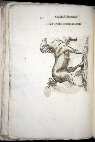 Image of Aldrovandi-1570-0532